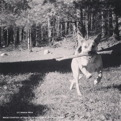 bwg_dog-and-stick
