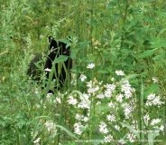 bwg_Summer-2017-cat-in-daisies-hd-1