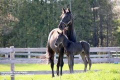 bwg_mareandfoal_lm